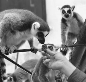 春节到石家庄动物园看猴